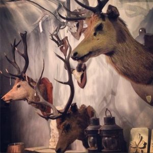 Stag Trophies at LASSCO Three Pigeons