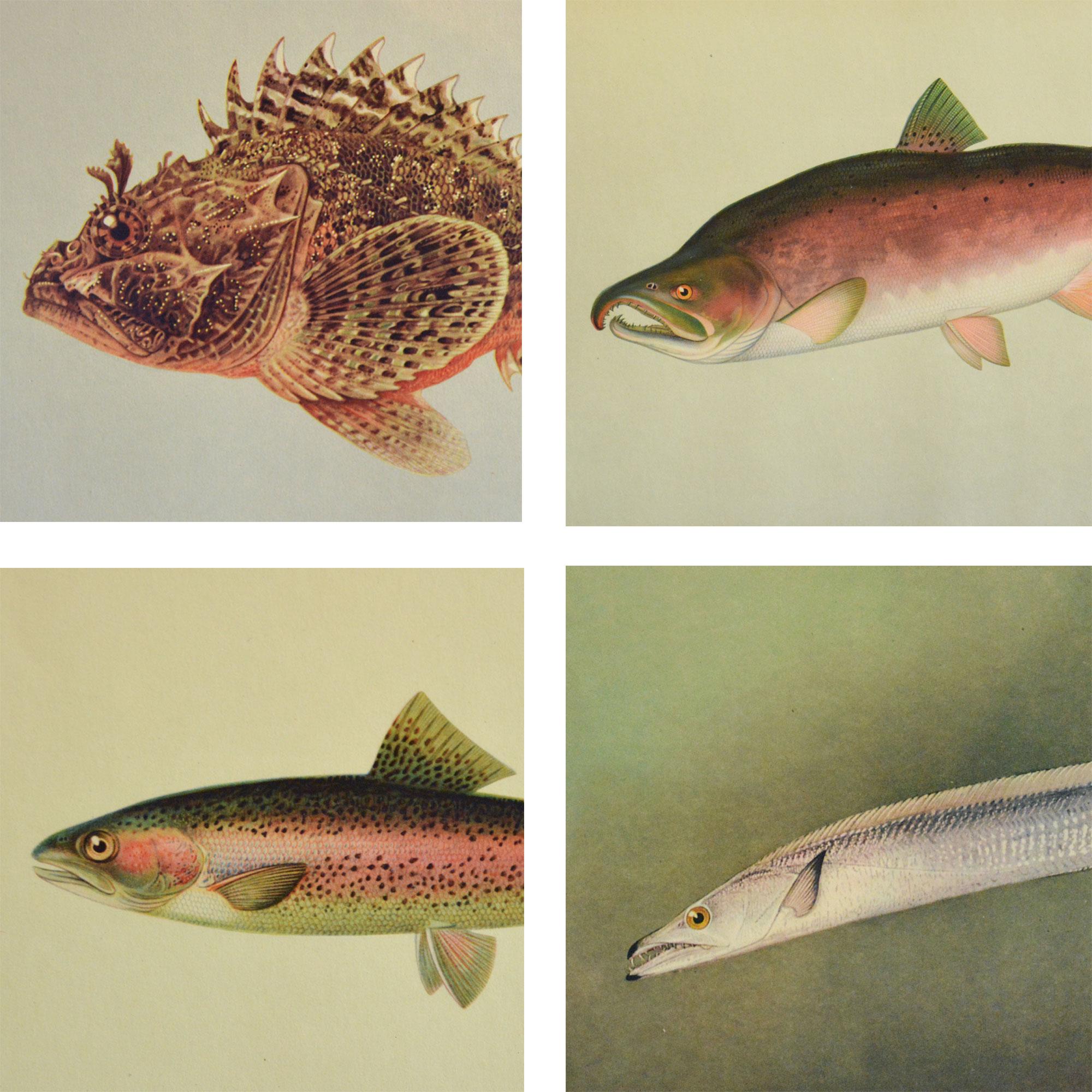 fish-group