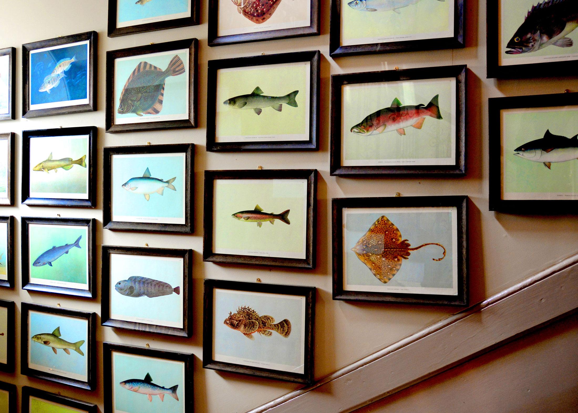 Fish Story
