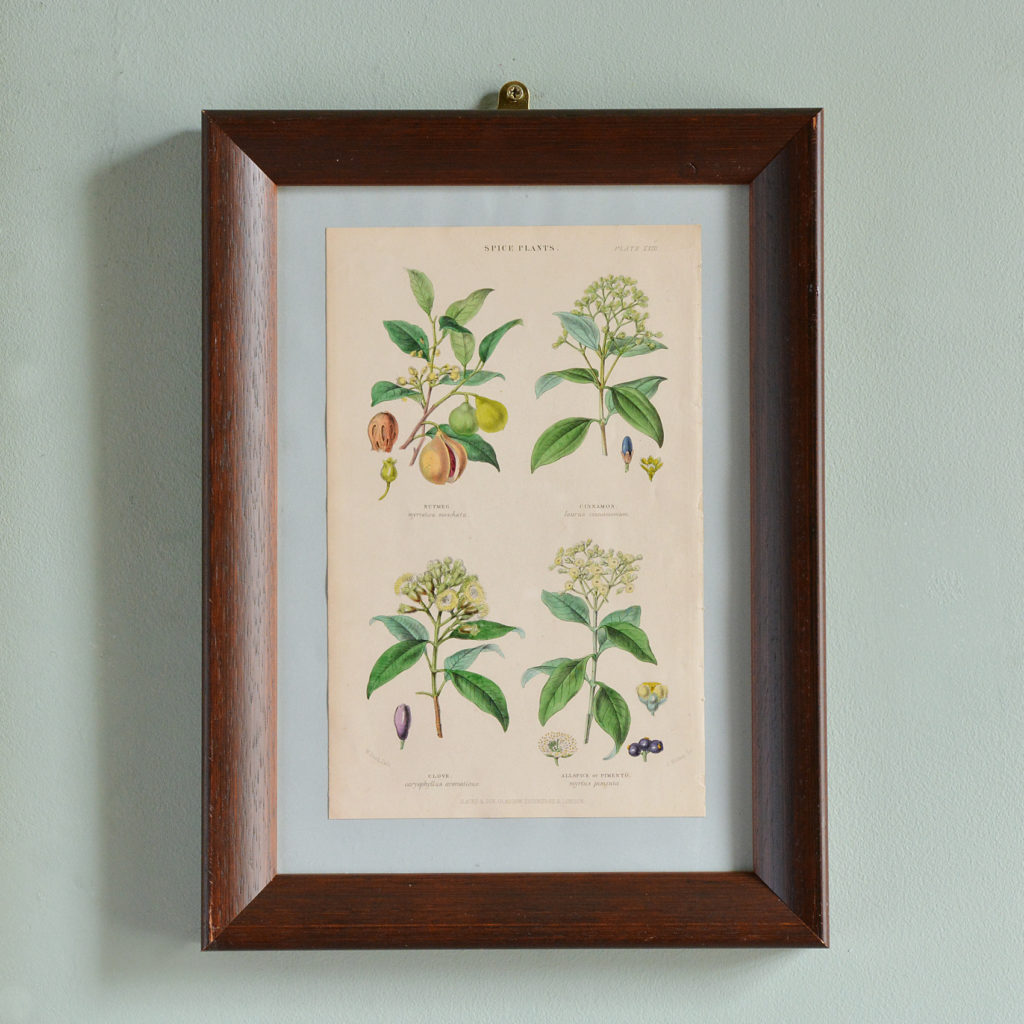 19th century Botanical prints,-0