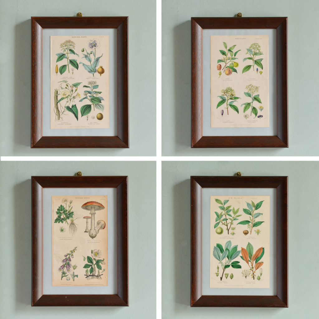 Botanical engravings