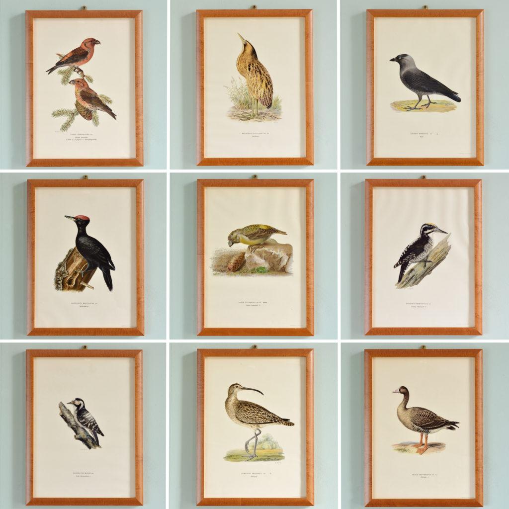 Swedish Birds (Svenska fåglar, efter naturen och på sten ritade)-92036