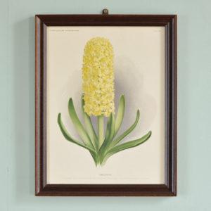 Chromolithograph floral prints by A. C. van Eeden & Co, published c1875-0