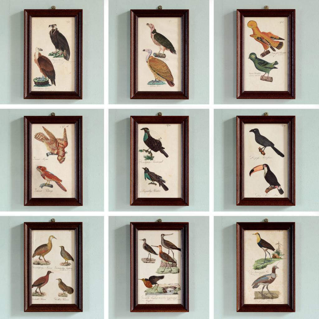 Copper engravings of birds