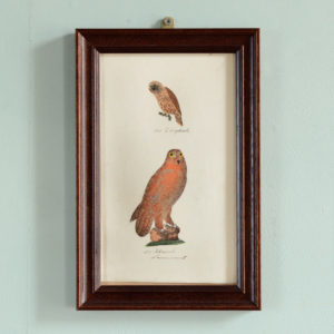 Vogel. Original early 19th century copper-engravings of birds.-0