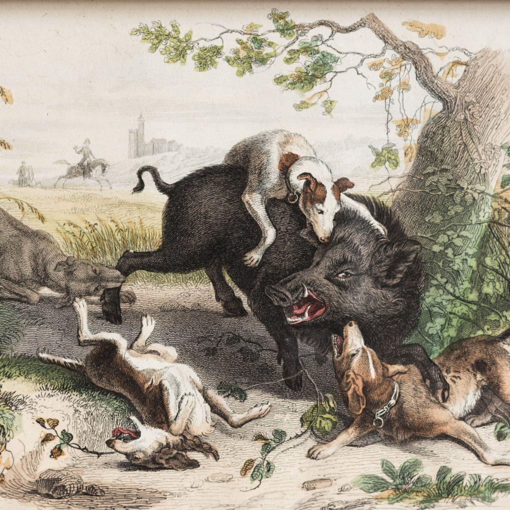 Boar Hunt-103086