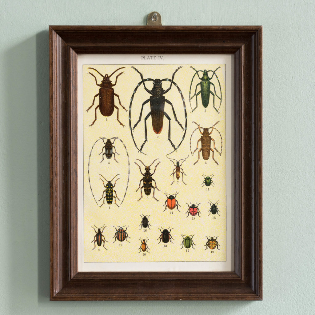 Butterflies and Beetles. Original chromolithographic prints,-0