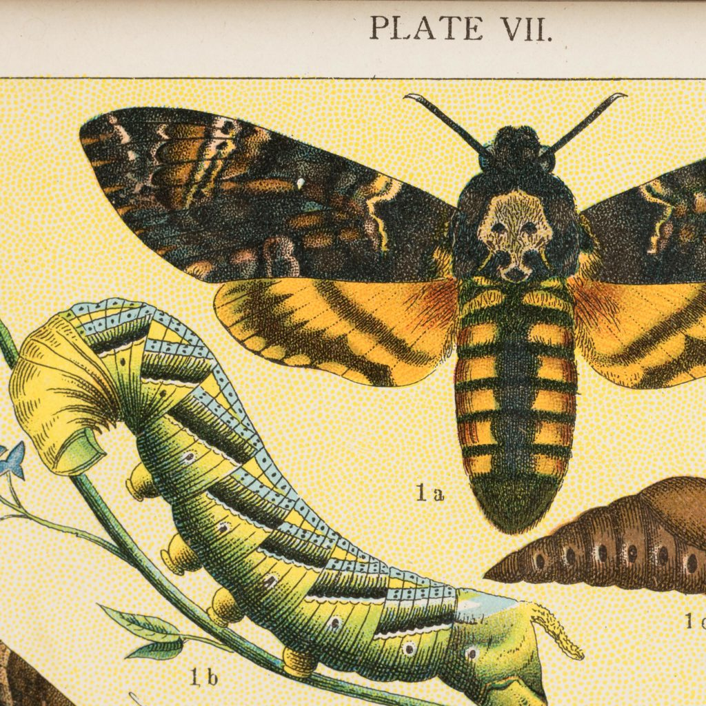 Butterflies and Beetles. Original chromolithographic prints,-103364