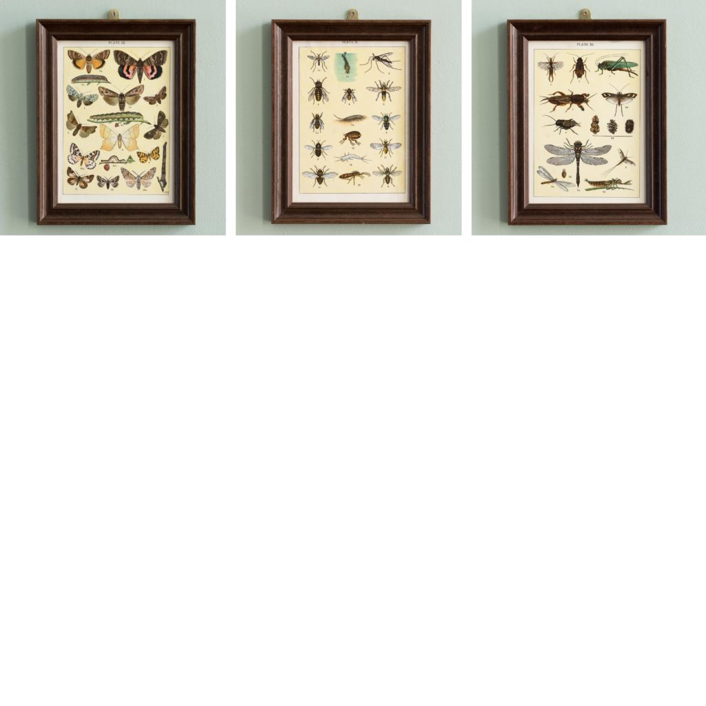 Butterflies and Beetles. Original chromolithographic prints,-103382