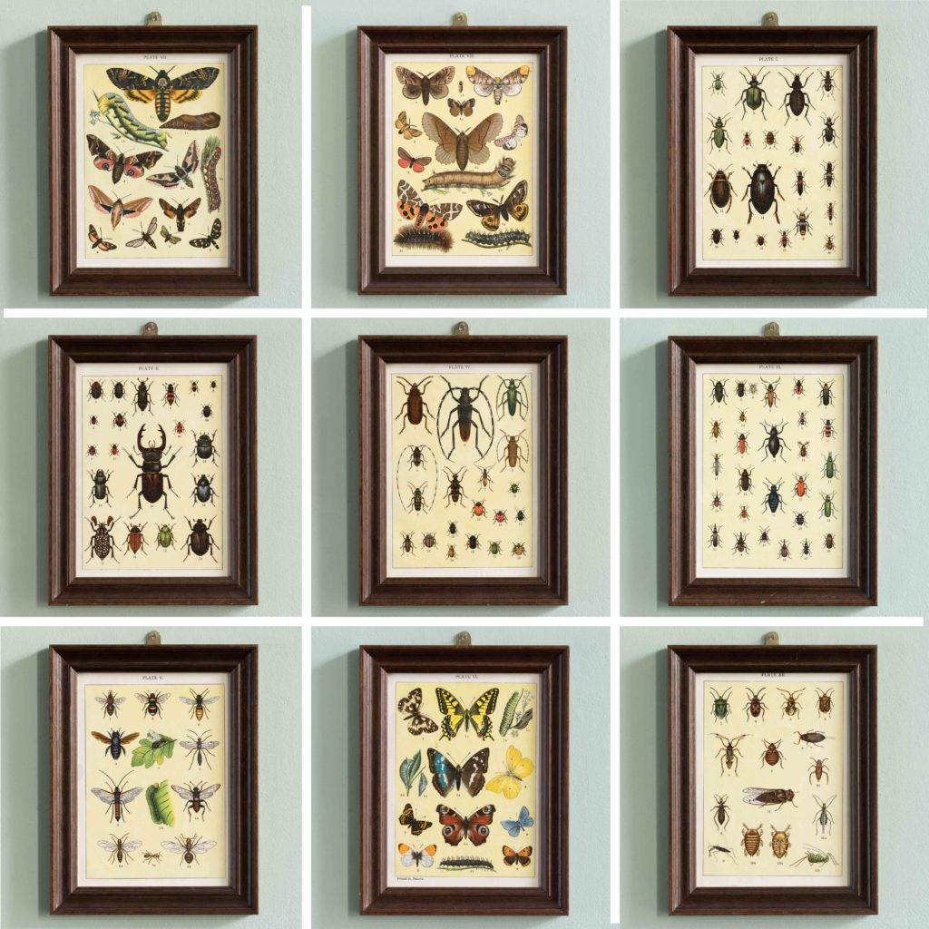 Butterflies and Beetles. Original chromolithographic prints,-103381