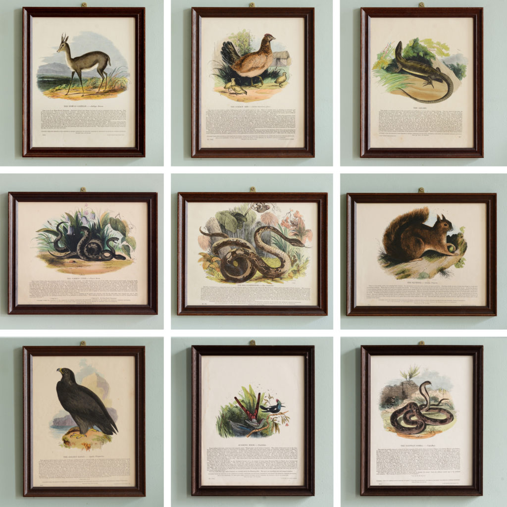 Natural History, original hand-coloured wood engravings published c1850-103725