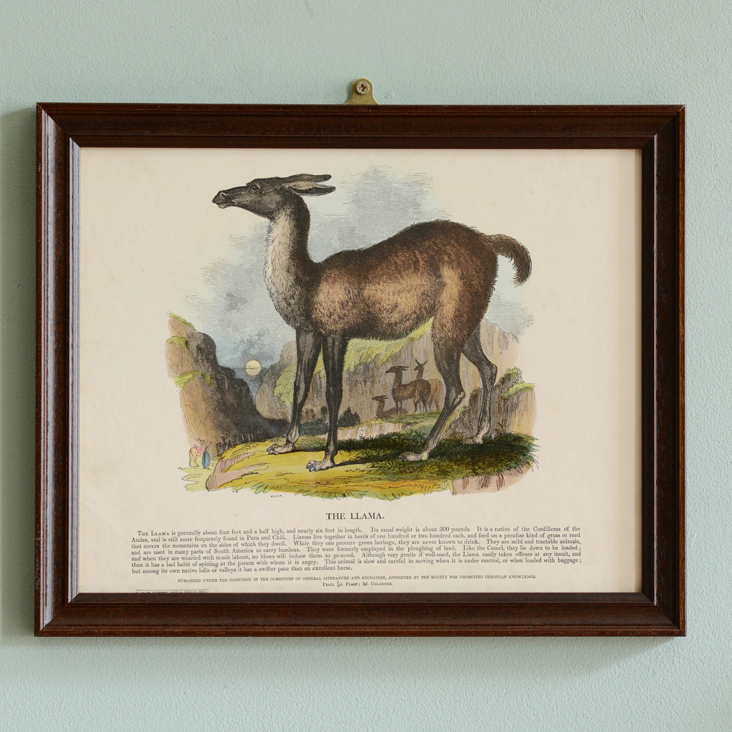 Natural History, original hand-coloured wood engravings published c1850-0