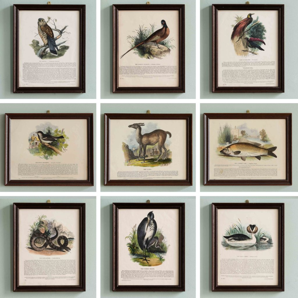 Natural History, original hand-coloured wood engravings published c1850-103724