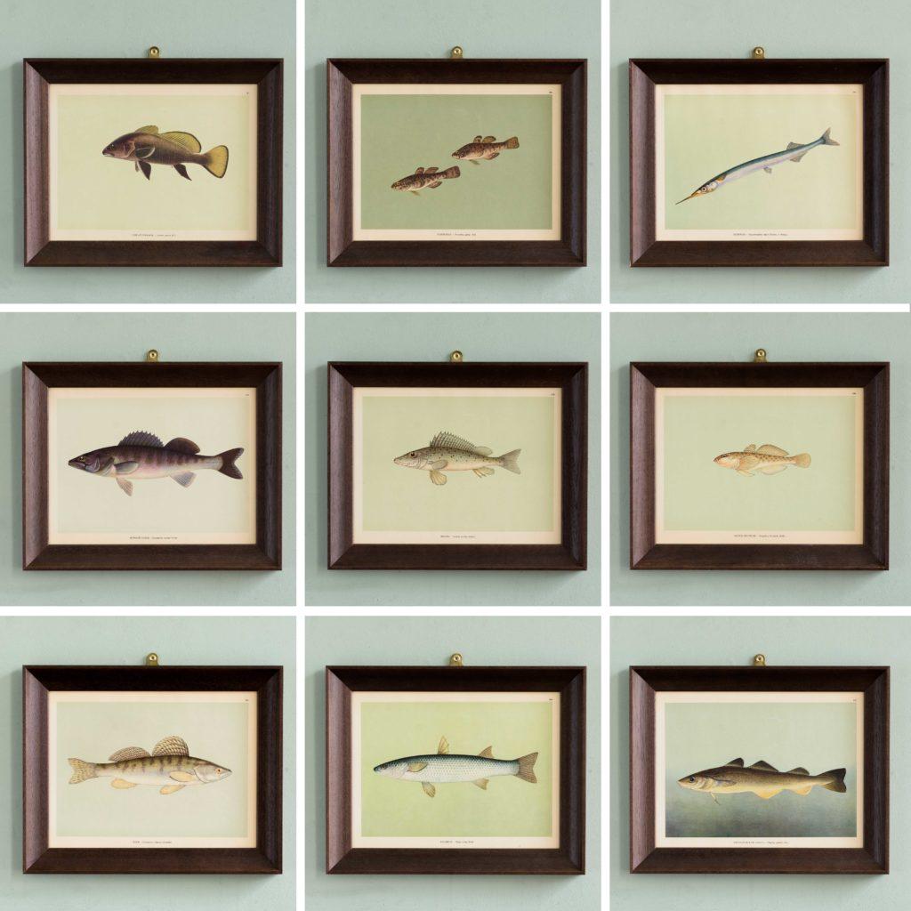 Soviet Era Fish Identification Prints-105053