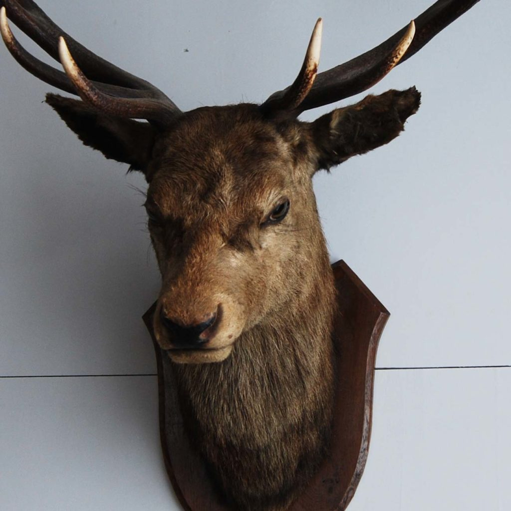 An 'Imperial' red deer stag's head-105855