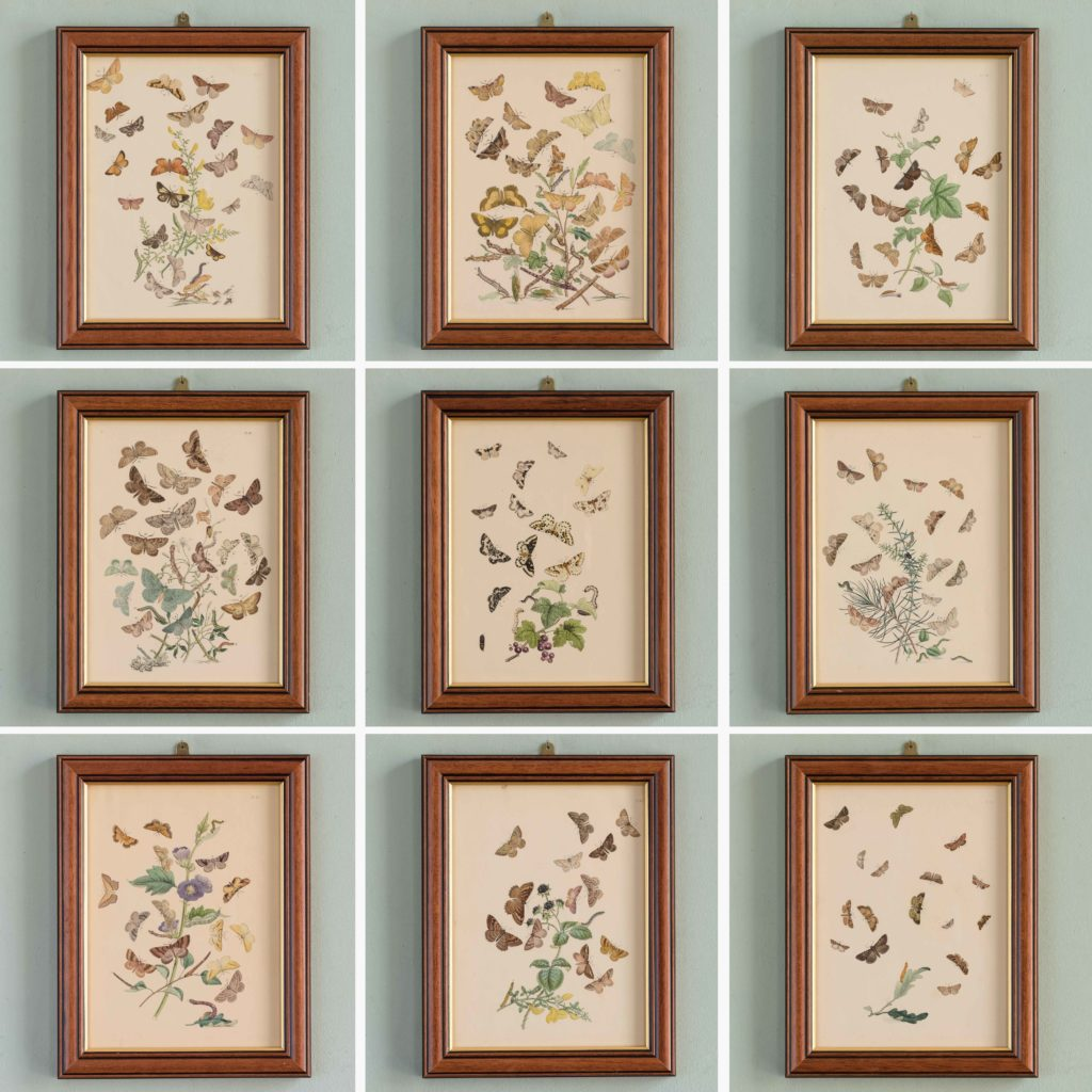 British Moths, original 19th century prints with hand-colour-106457
