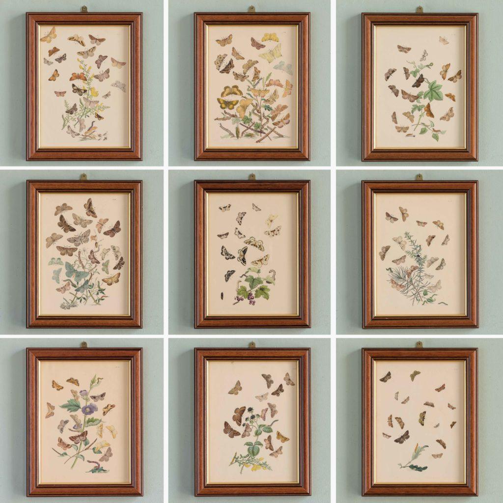 British Moths, original 19th century prints with hand-colour-106485