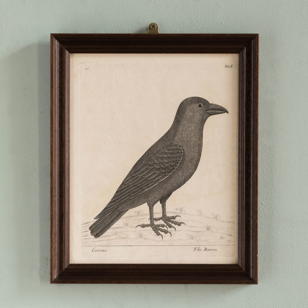 Natural History of Birds,-0