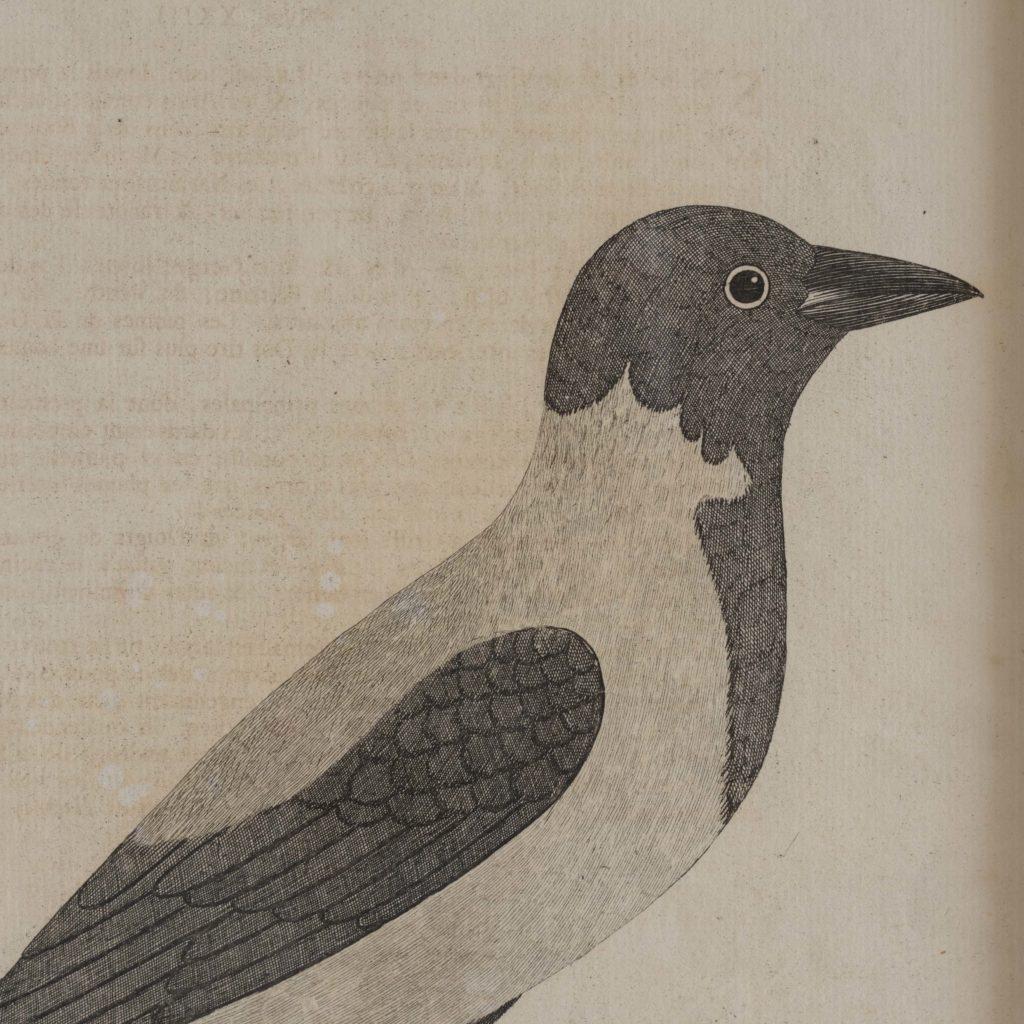 Natural History of Birds,-107554