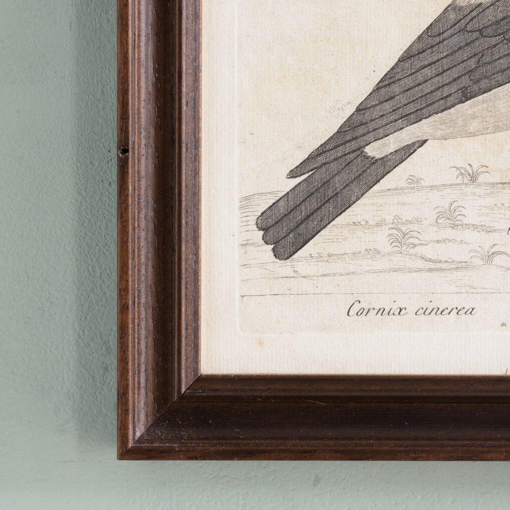 Natural History of Birds,-107553