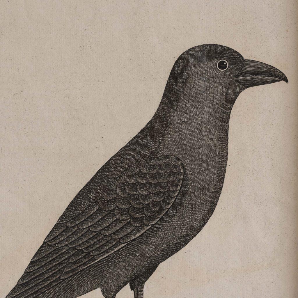 Natural History of Birds,-107542