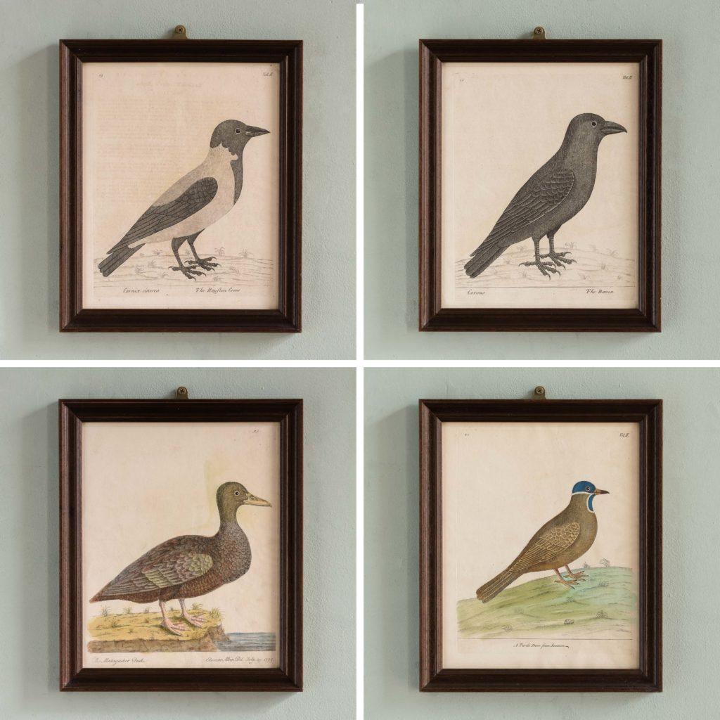 Natural History of Birds,-107549