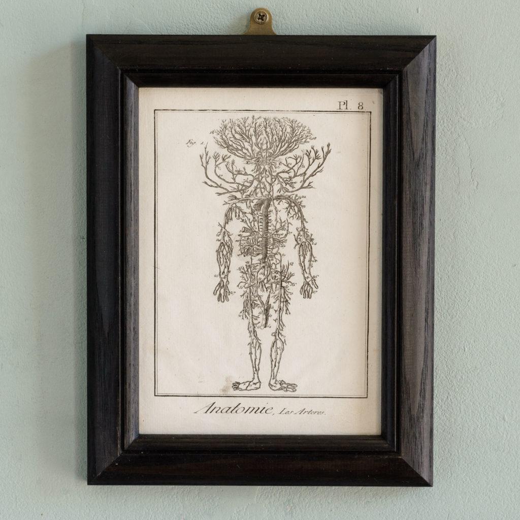 Original 18th century Anatomical prints-0