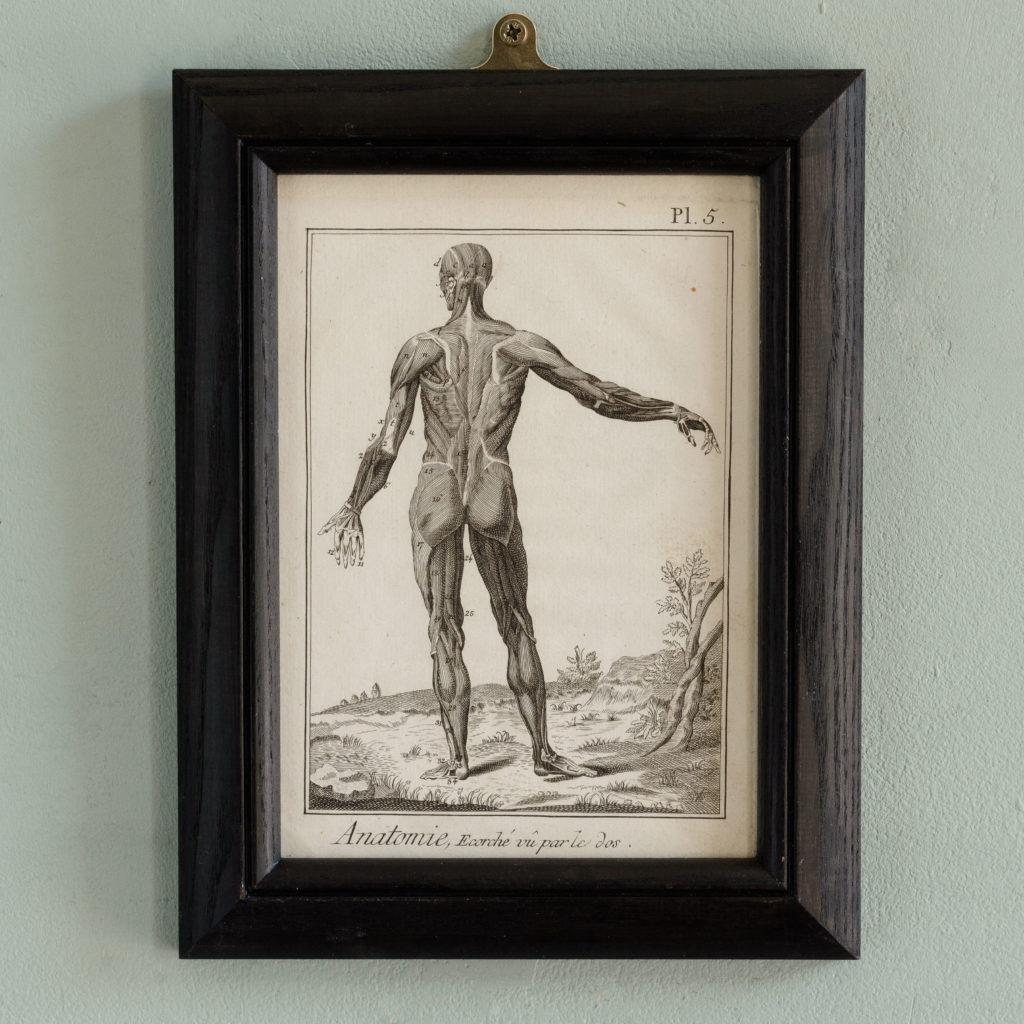 Original 18th century Anatomical prints-0