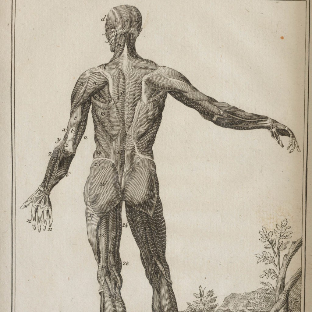 Original 18th century Anatomical prints-107375