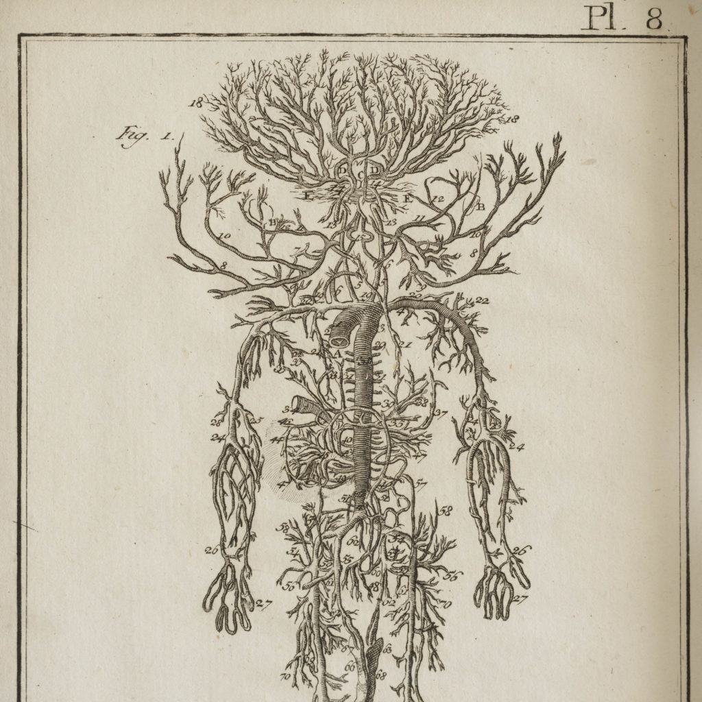 Original 18th century Anatomical prints-107359