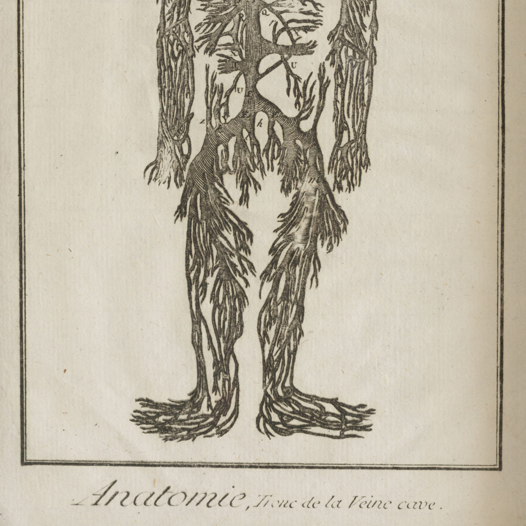 Original 18th century Anatomical prints-107335