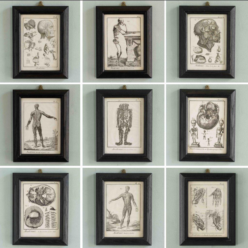 Original 18th century Anatomical prints-107331