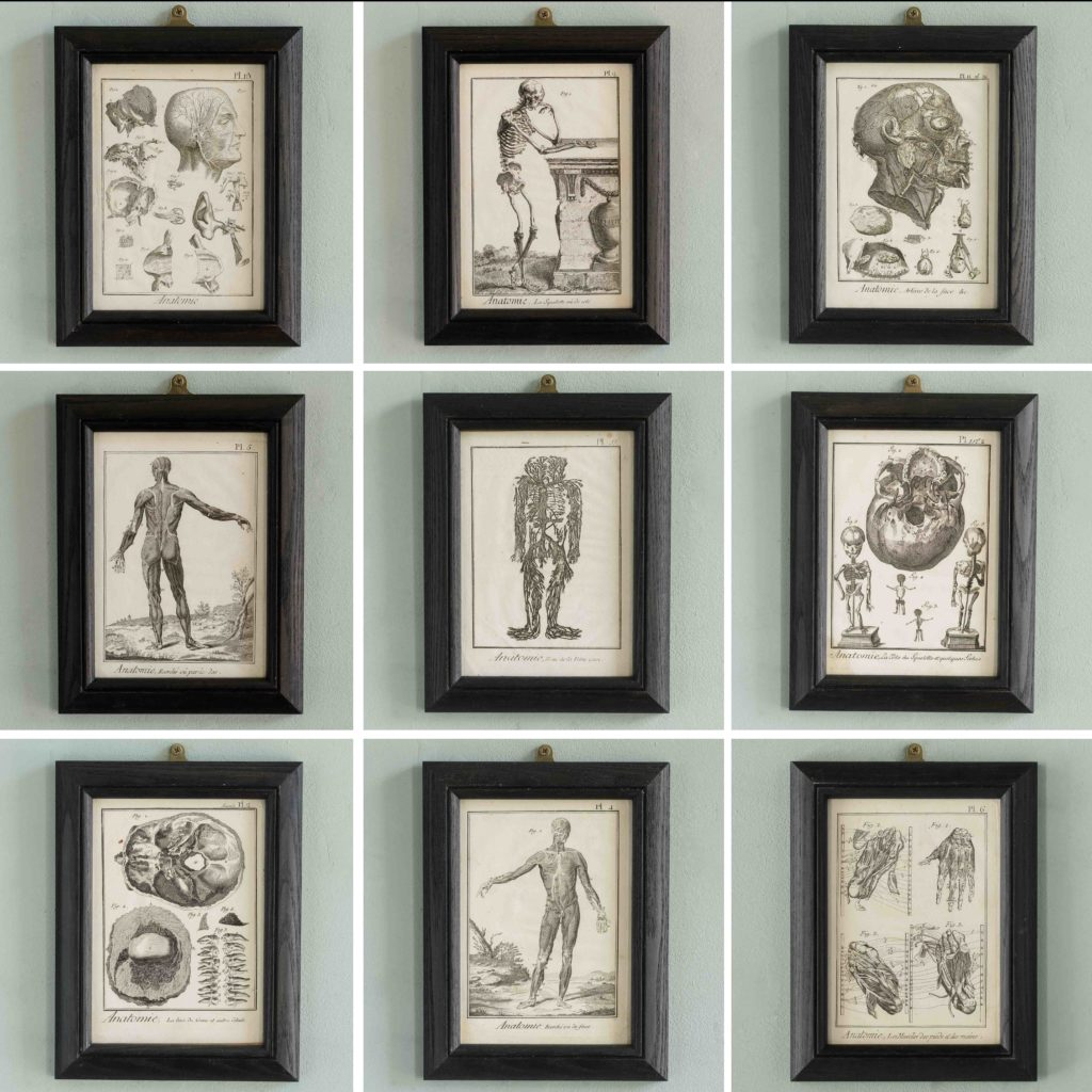Original 18th century Anatomical prints-107371