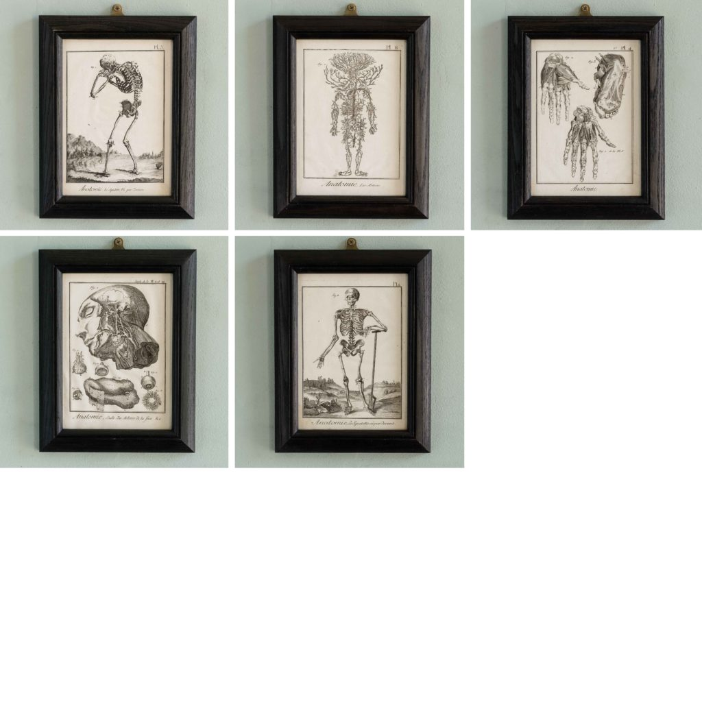 Original 18th century Anatomical prints-107342