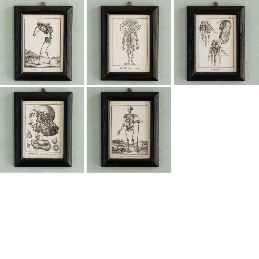 Original 18th century Anatomical prints-107356