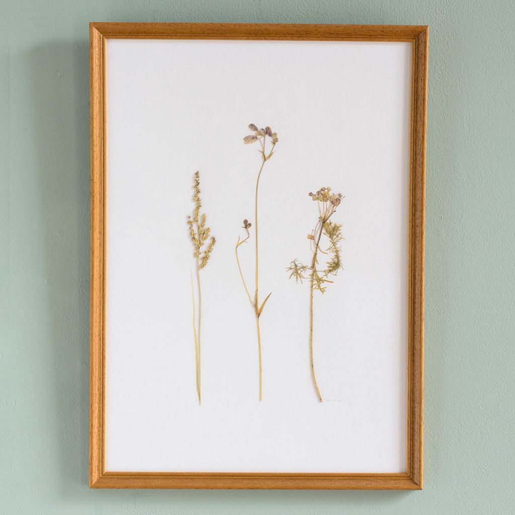 Pressed Flowers and Grasses-0