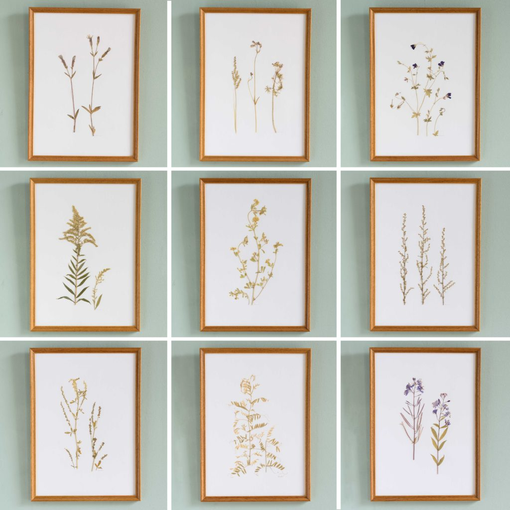 Pressed Flowers and Grasses-108145