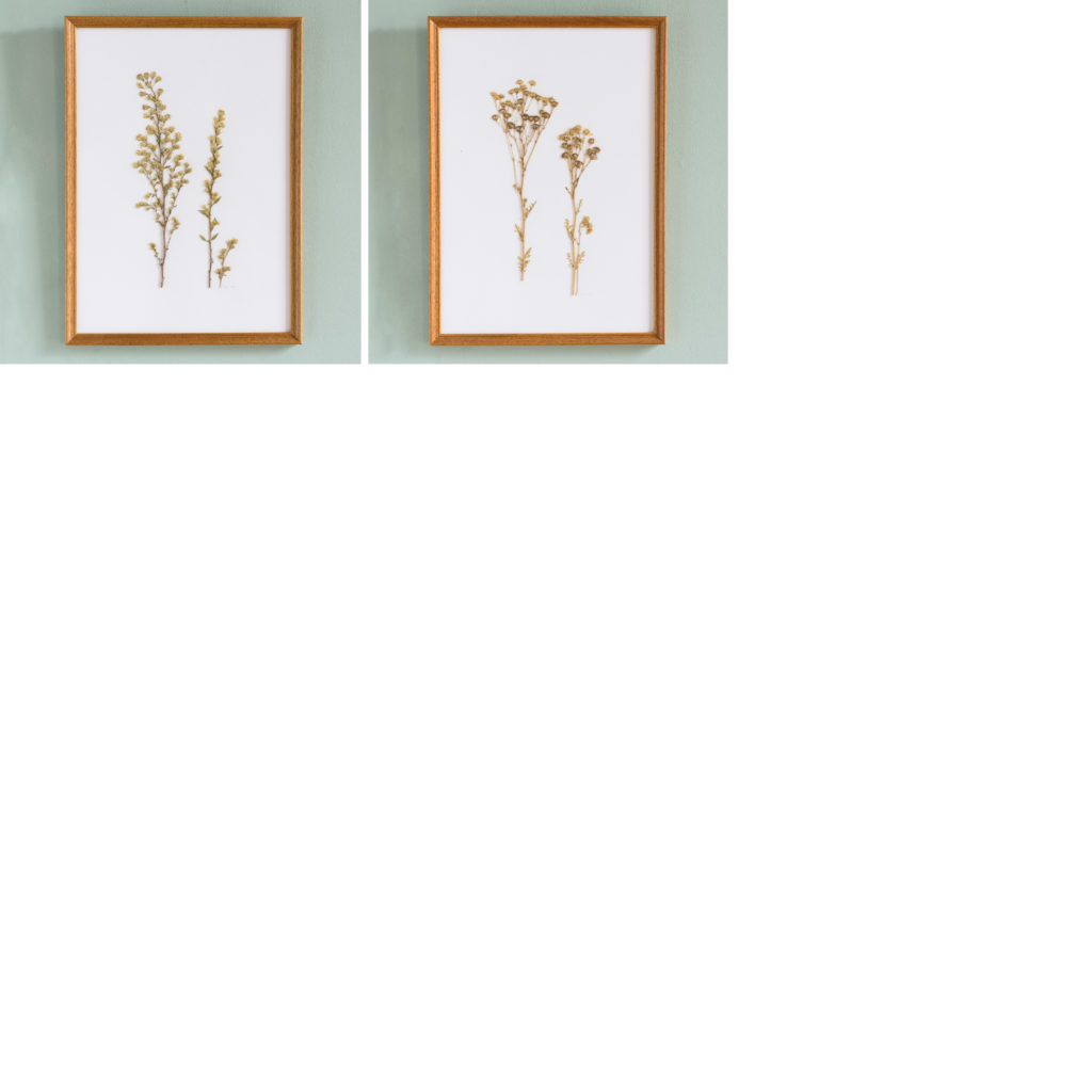 Pressed Flowers and Grasses-108158