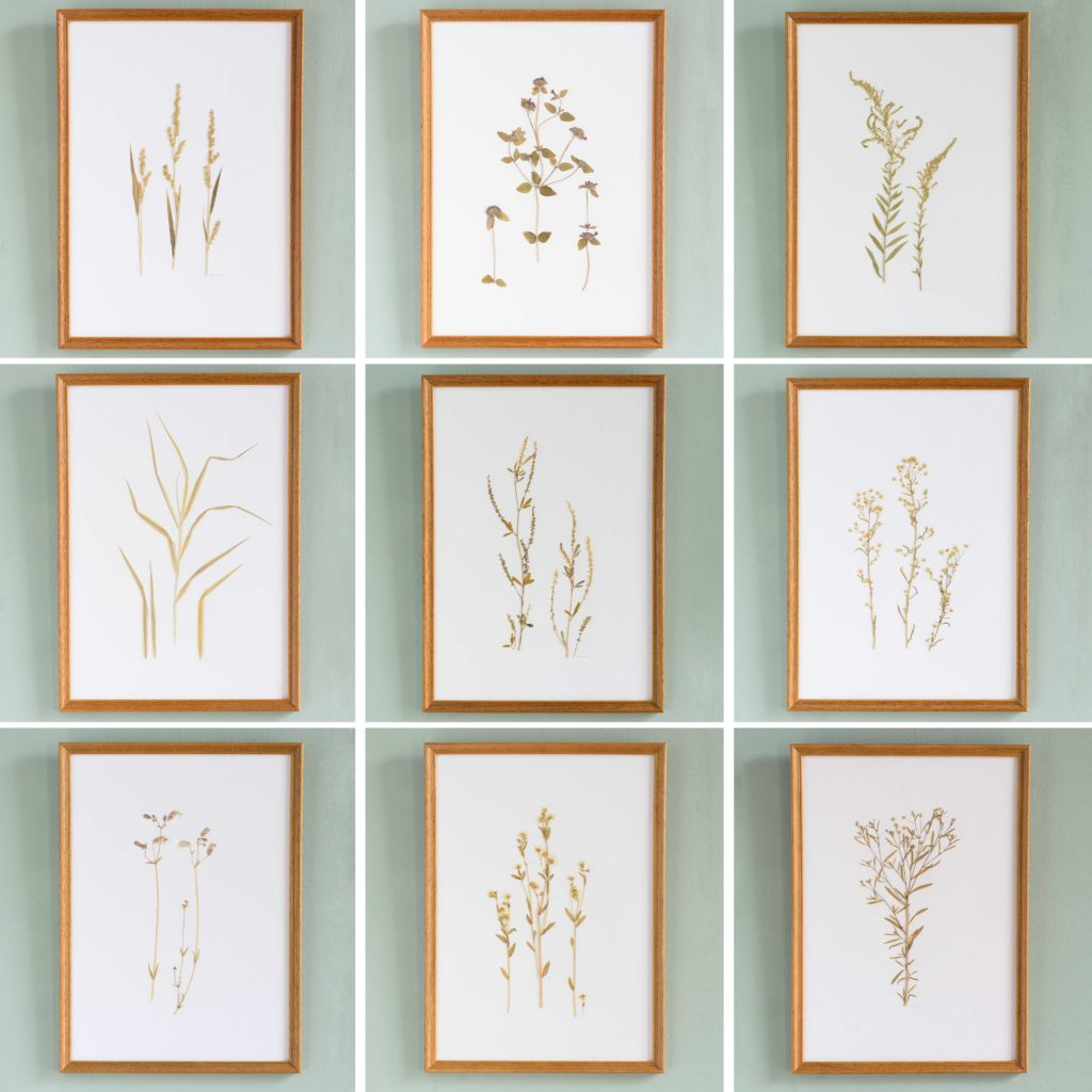 Pressed Flowers and Grasses-108238