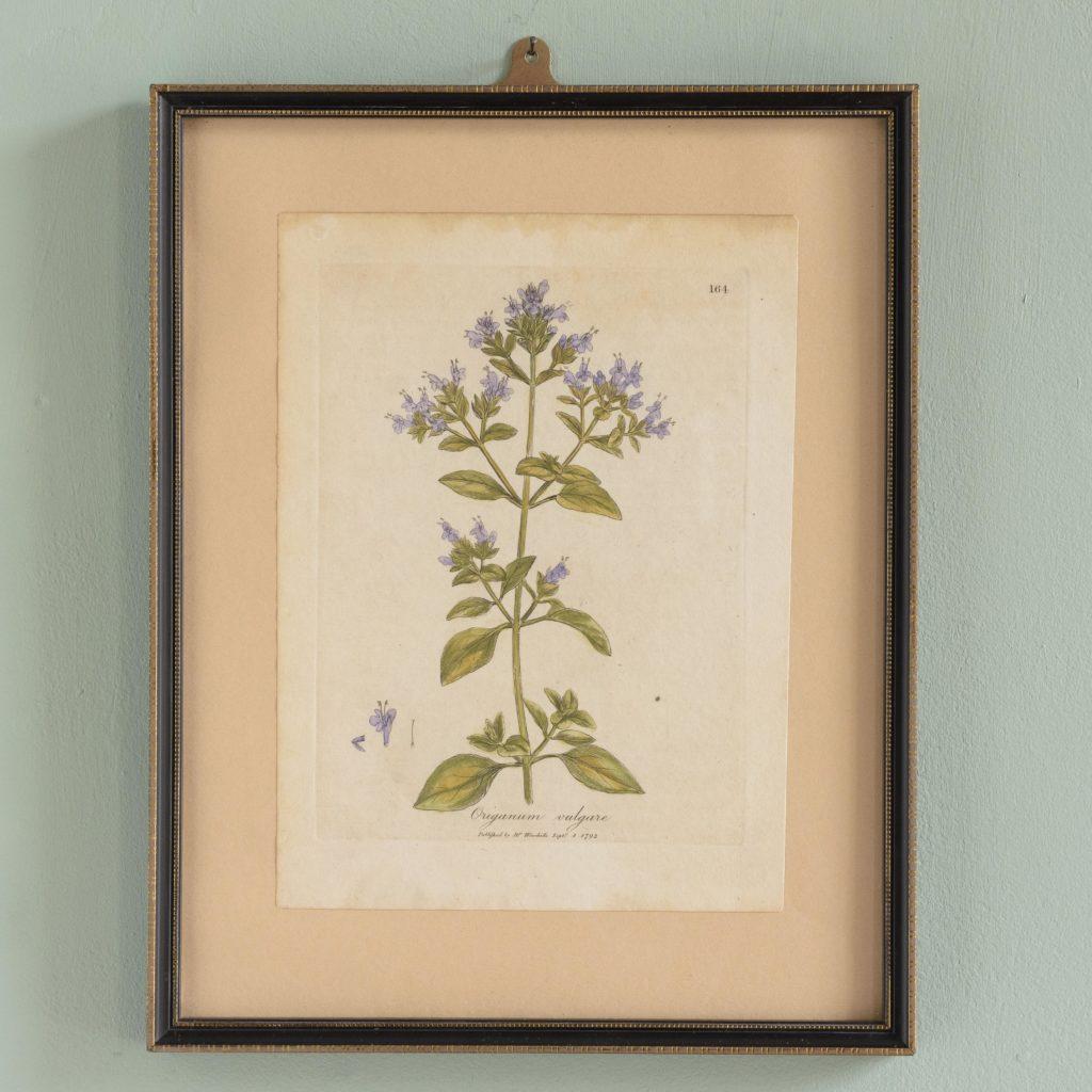 Medical Botany, original prints published 1792,-0