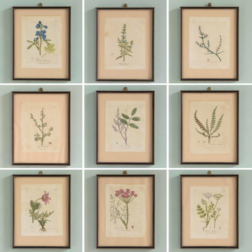 Medical Botany, original prints published 1792,-107992