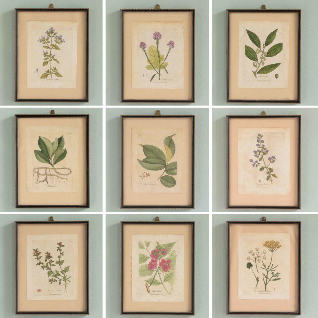 Medical Botany, original prints published 1792,-107980
