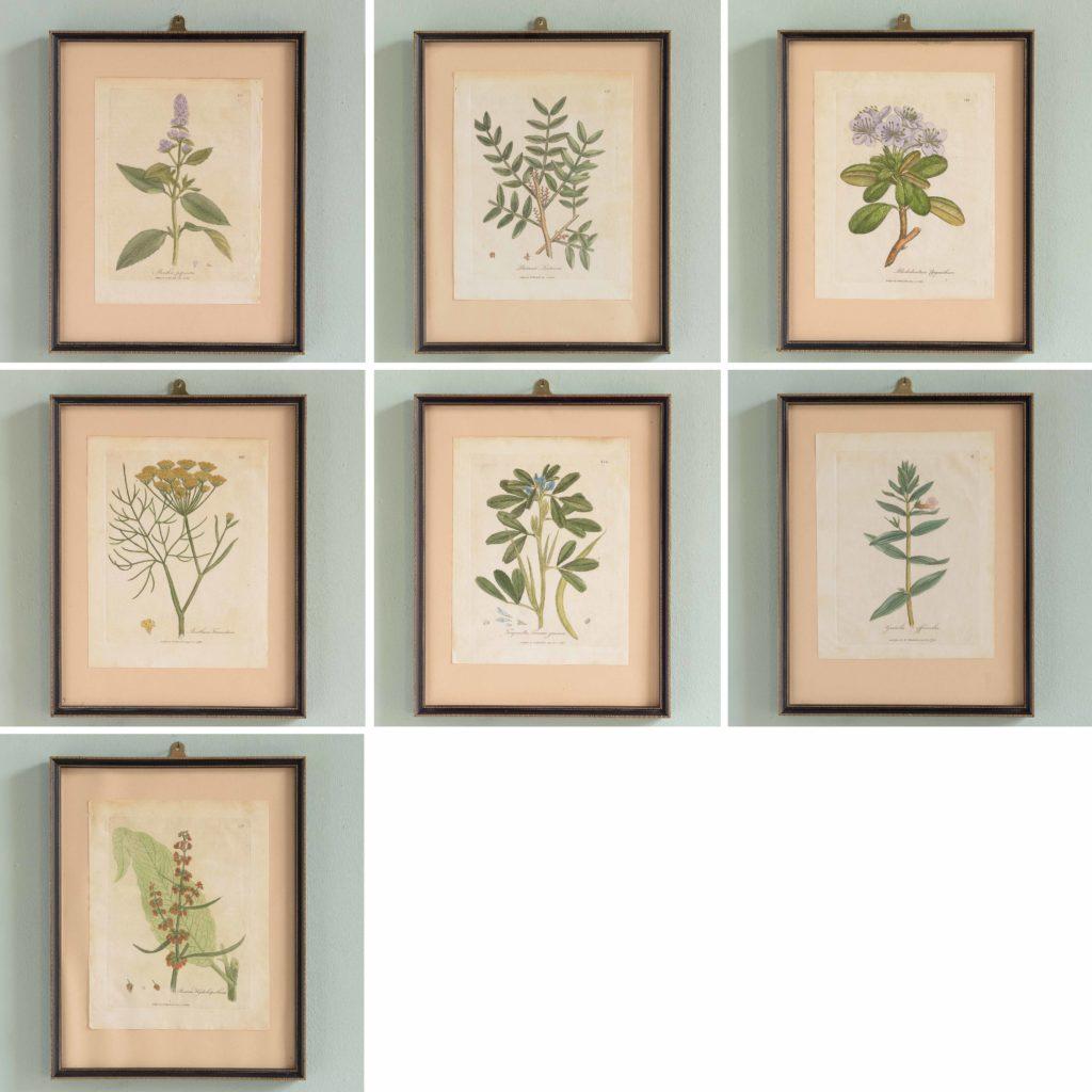 Medical Botany, original prints published 1792,-107991