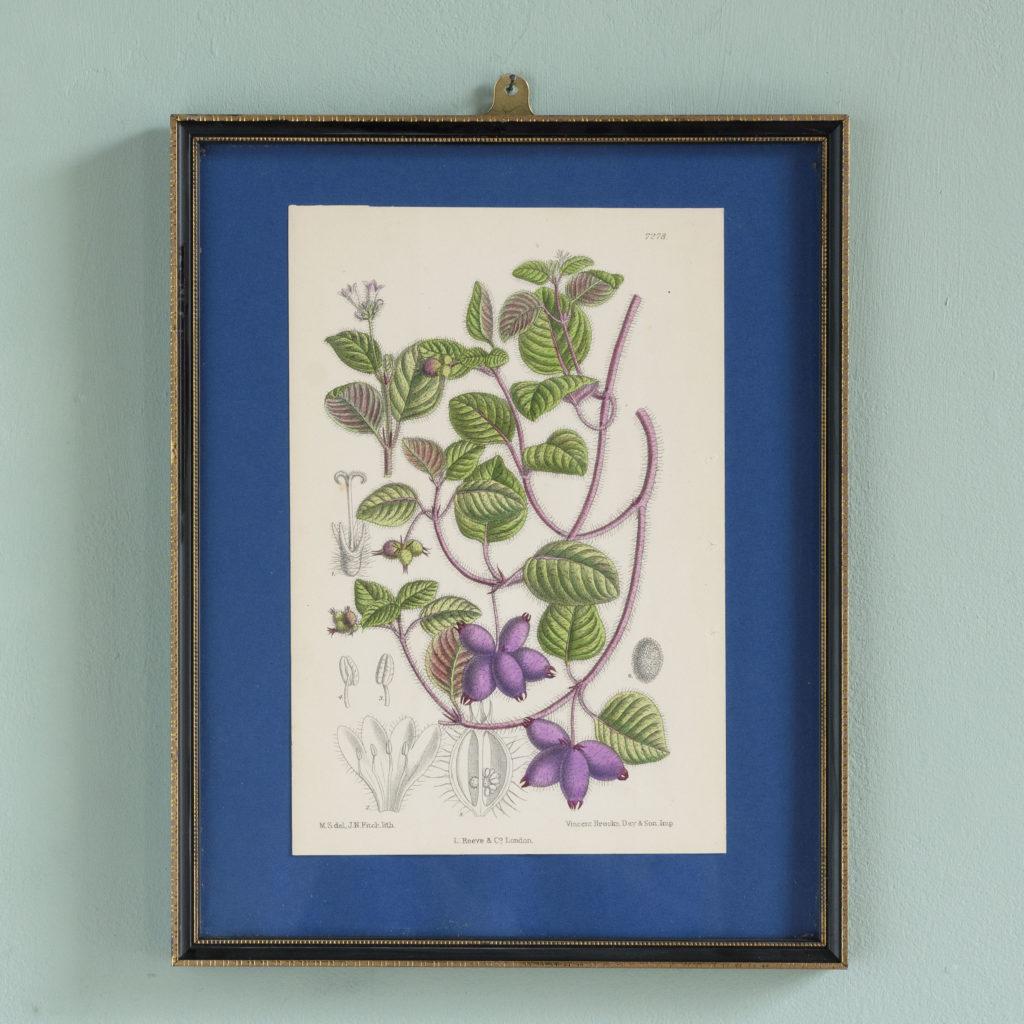 Curtis's Botanicals, published 1892-0