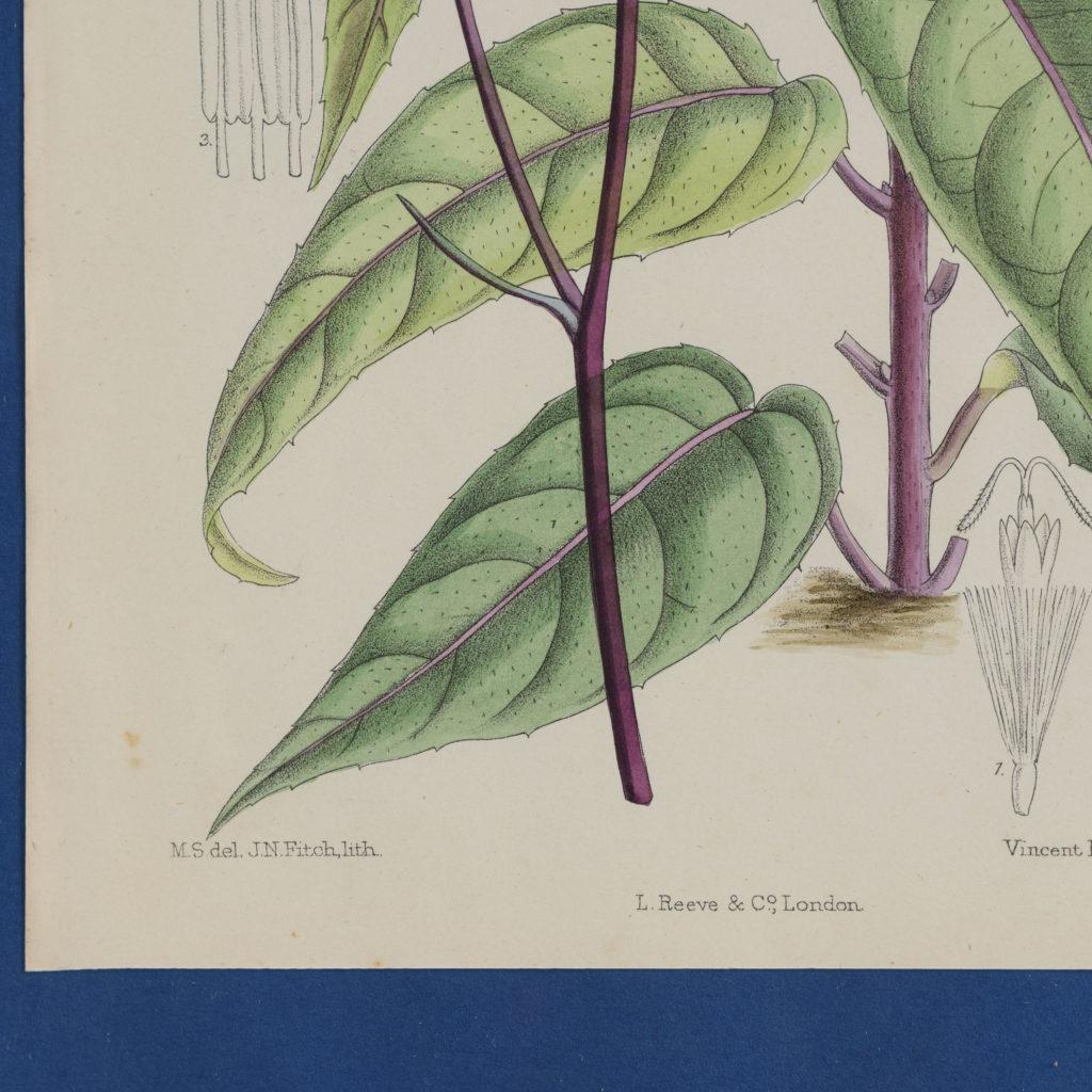 Curtis's Botanicals, published 1892-108670