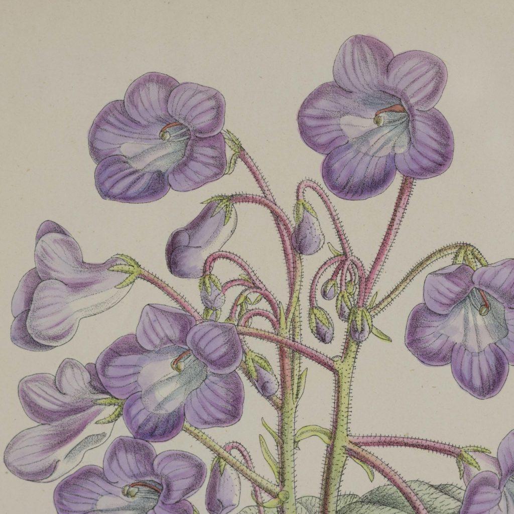 Curtis's Botanicals, published 1892-108662