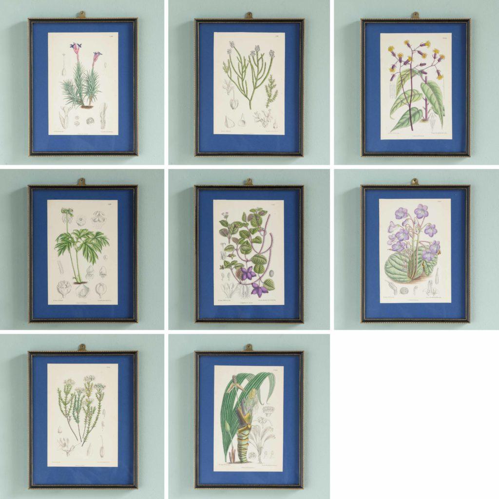 Curtis's Botanicals, published 1892-108677