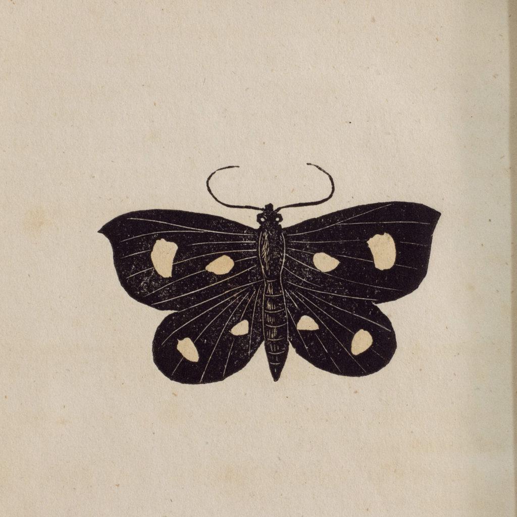 Butterflies and moths, -109826