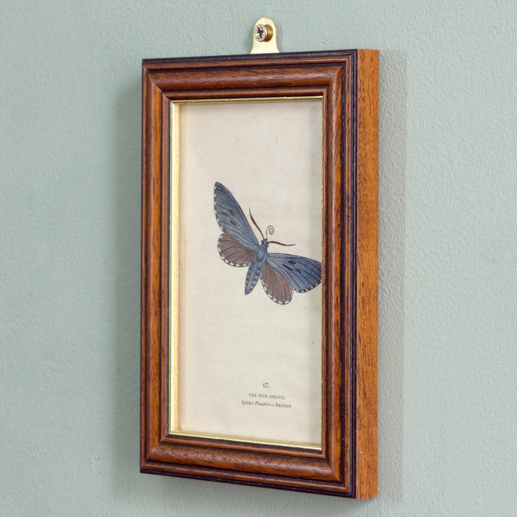 Butterflies and moths, -109809