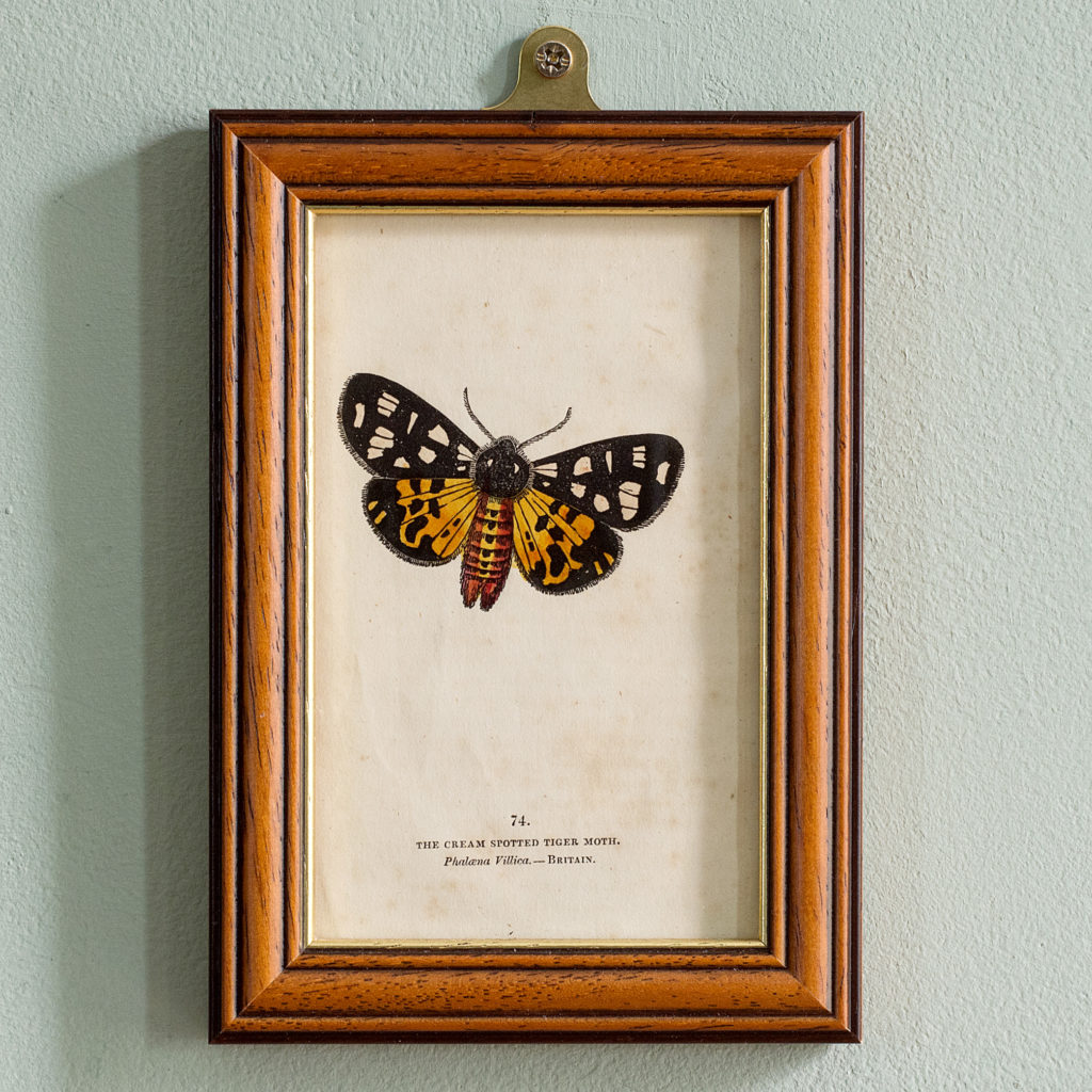 Butterflies and moths, -0